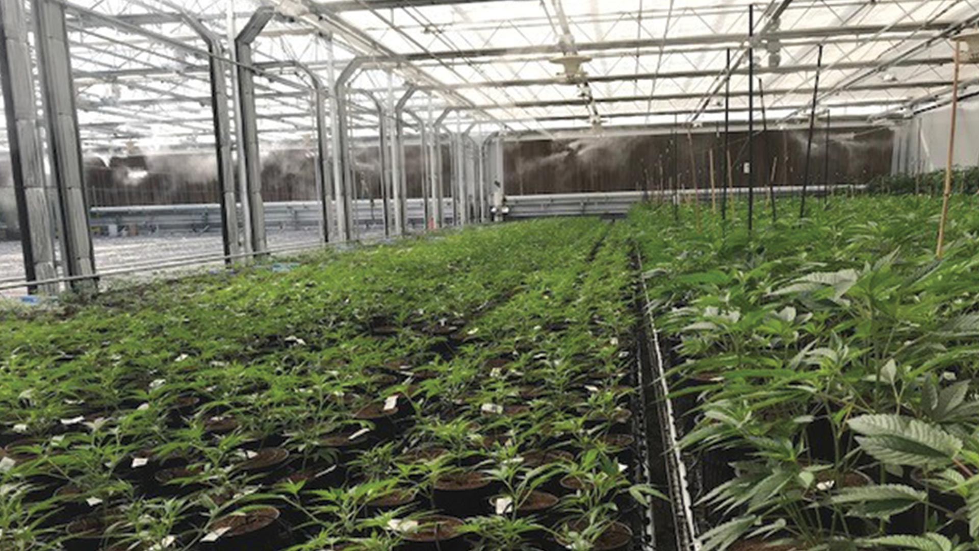 dispensary for sale