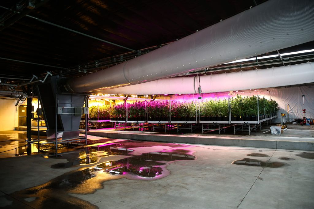 Desert Pacific Properties Quoted in Recent Desert Sun Newspaper Cannabis Cultivation Article