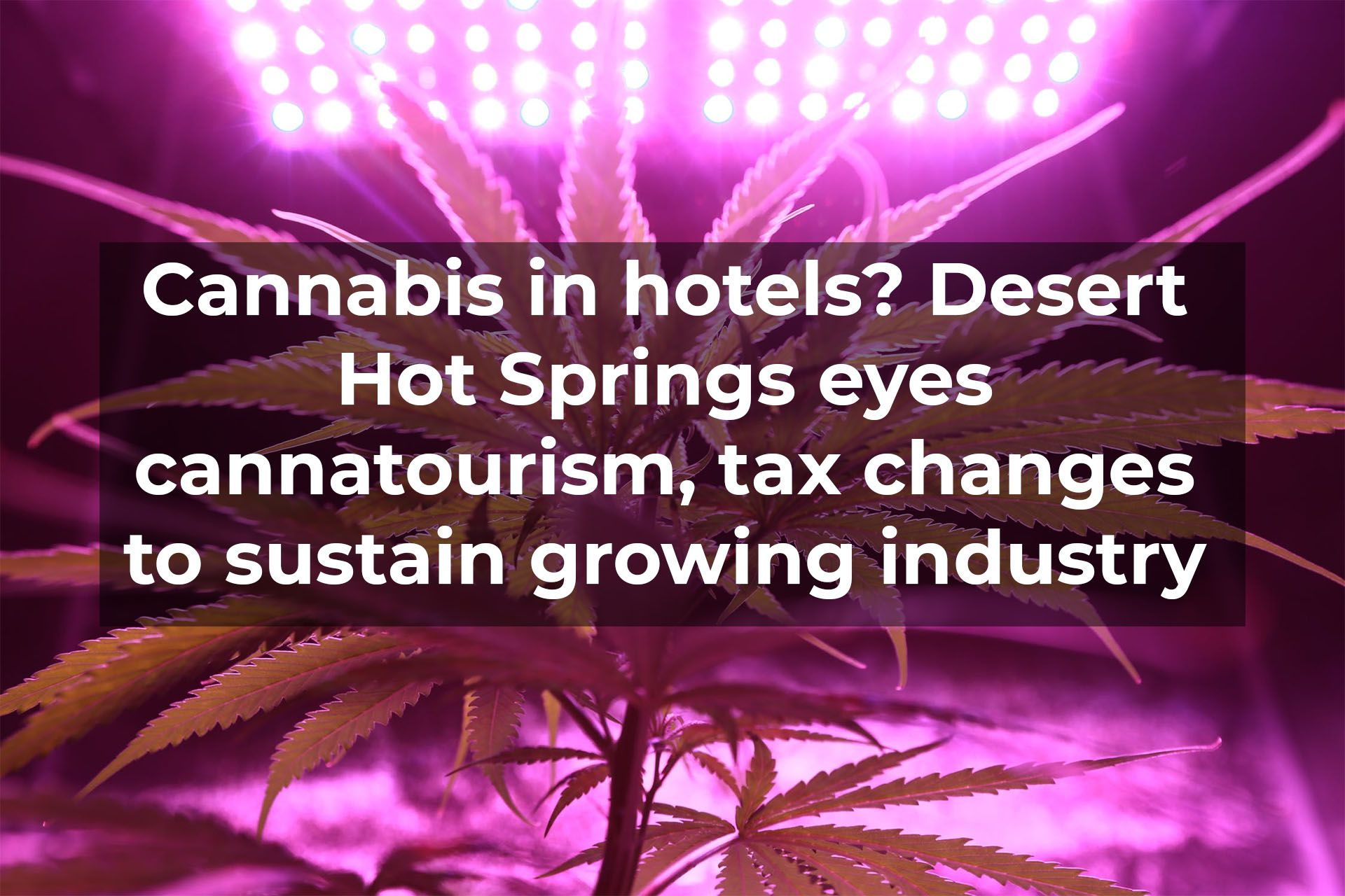 Cannabis in hotels? Desert Hot Springs eyes cannatourism, tax changes to sustain growing industry